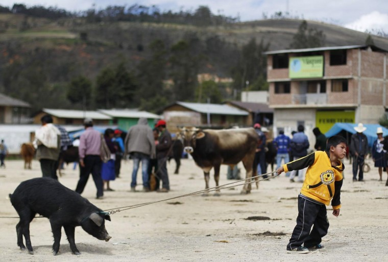 A piglet resists as a boy tries to pull it, at a cattle market in Celendin, at Peru's northern region of Cajamarca, June 16, 2013. (Enrique Castro-Mendivil/Reuters)