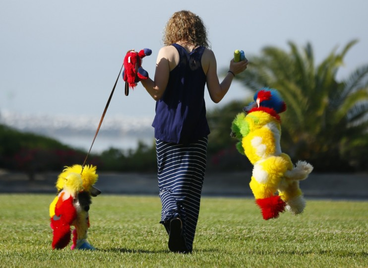 Southern California dog groomer Catherine Opson walks her dogs Kobe and Porsche at a park in Dana Point, California. (Mike Blake/Reuters)
