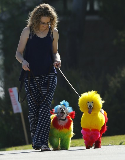 Southern California dog groomer Catherine Opson walks her dogs Kobe (R) and Porsche at a park in Dana Point, California. (Mike Blake/Reuters)