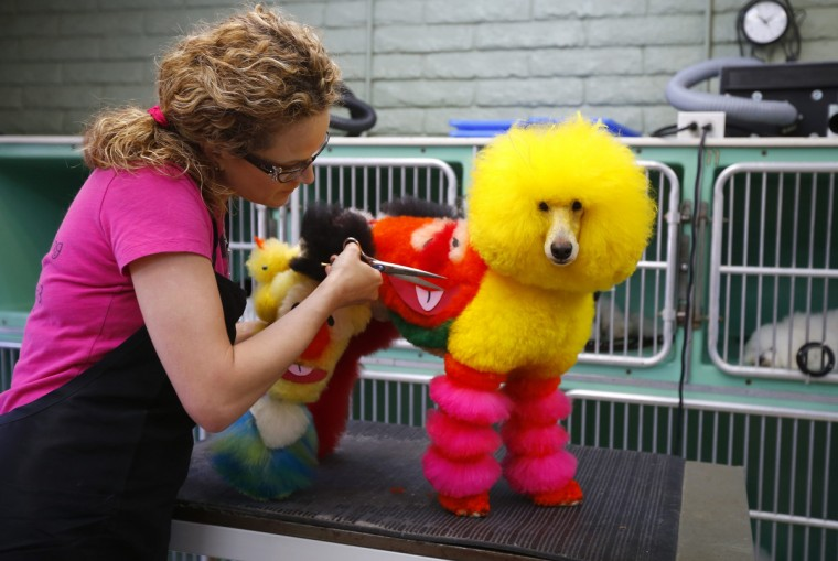 Southern California dog groomer Catherine Opson works on miniature poodle Kobe at her grooming salon in Capistrano Beach, California. (Mike Blake/Reuters)
