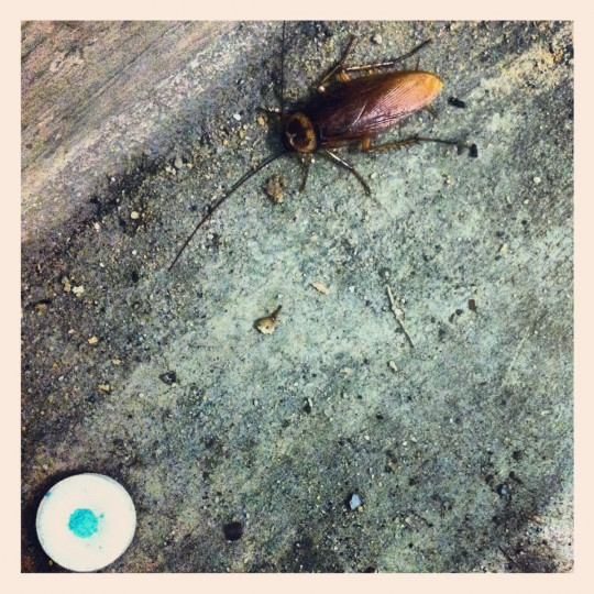 """Hugo the roach"" - Downtown parking ramp, August 2, 2012 (Nick Tann/Baltimore Sun)"