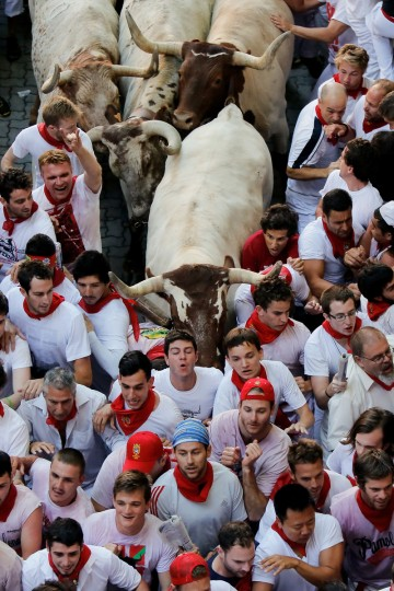 Steers make their way through a crowd of runners after the Alcurrucen's ranch fighting bulls entered the bullring during the second day of the San Fermin Running Of The Bulls festiva in Pamplona, Spain. (Pablo Blazquez Dominguez/Getty Images)
