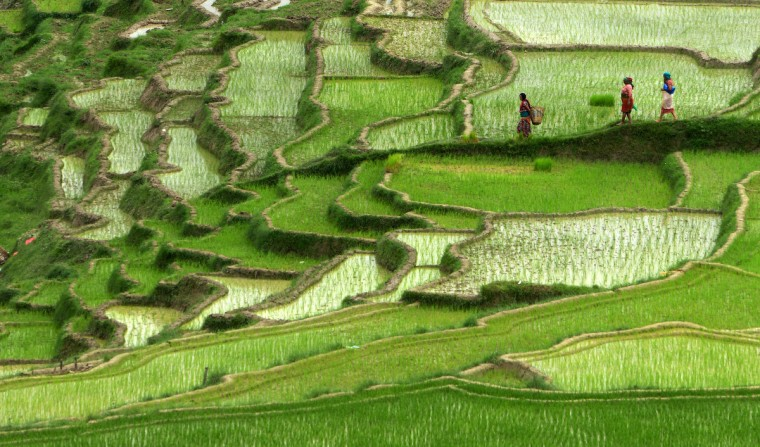 Nepalese farmers walk past rice paddy fields in Changu Naryan village on the outskirts of Kathmandu. Nepal's rice planting season began with the arrival of the monsoon. Over 80 percent of Nepal's 27 million population depends upon agriculture and paddy is the major crop in the Himalayan nation. (Prakash Mathema/Getty Images)