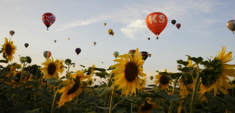 "Hot air-balloons fly over a field of sunflowers in Chambley-Bussieres, eastern France on July 27, 2013 as part of the yearly event ""Lorraine Mondial Air Ballons"", an international air-balloon meeting. Around 363 to 373 air-balloons took part to the take-off in a try to set a world record. (Jean-Christophe Verhaegen/Getty Images)"