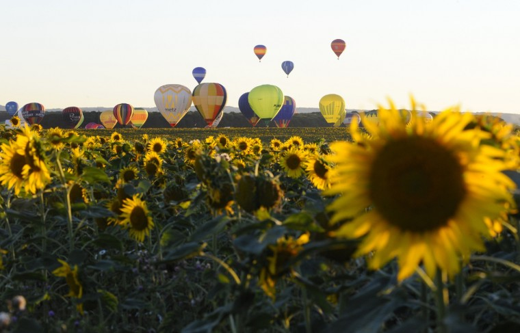 "Hot-air balloons rise over a field of sunflowers as they fly over Chambley-Bussieres, eastern France, on July 31, 2013, to try to set a world record with 408 balloons in the sky, as part of the yearly event ""Lorraine Mondial Air Ballons"", an international air-balloon meeting. (Jean-Christophe Verhaegen/Getty Images)"