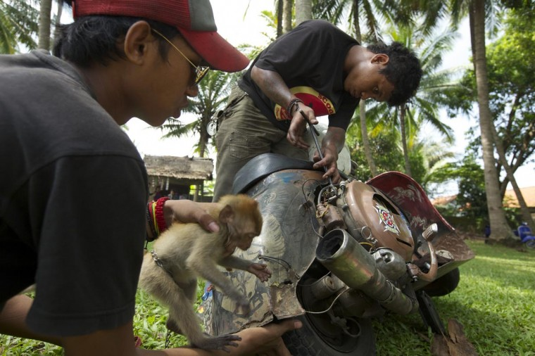 A Vespa enthusiast works on his modified vespa as his friend keeps a pet monkey from interfering during a scooter festival on June 30, 2013 in Cibeureum, about 100 km west of Jakarta, Indonesia. (Ed Wray/Getty Images)