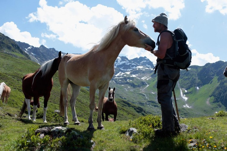 Alpine cattle herder Martin Riedmann looks for a herd of Haflinger horses near his alpine dairy Alpe Albona in the Vorarlberg mountain range of western Tyrol on July 25, 2013 near Bludenz, Austria. Riedmann is commissioned by farmers from his home village of Dornbirn to lead cattle and horses up into the mountains every summer, where the animals thrive on the abundant alpine meadows. (Johannes Simon/Getty Images)