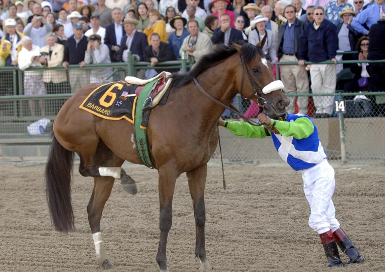 Preakness favorite Barbaro's jockey Edgar Prado settles his ride after Barbaro pulled up with an injured rear right leg, on May 20, 2006 in Baltimore. (Gene Sweeney Jr./Baltimore Sun)