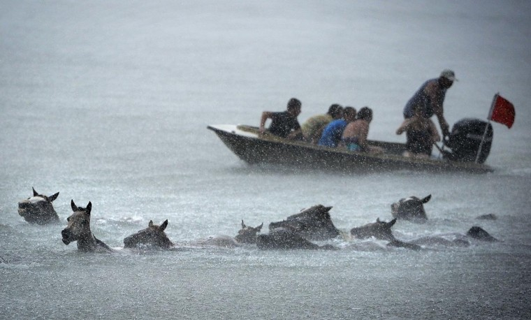 A boat follows close behind as the ponies make their swim to Chinoteague Island. (Erin Kirkland/Baltimore Sun)
