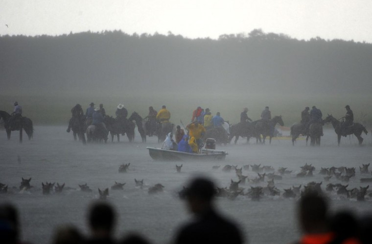 Bystanders watch as the ponies make the trek to Chincoteague Island. (Erin Kirkland/Baltimore Sun)