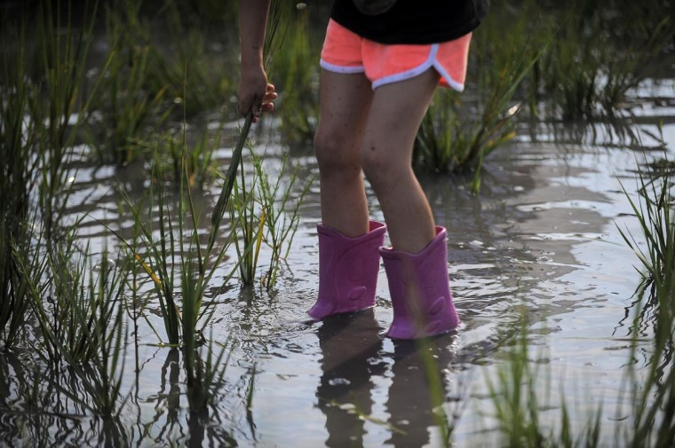 Many bystanders stood in muddy water as they waited for the ponies to make their swim. (Erin Kirkland/Baltimore Sun)