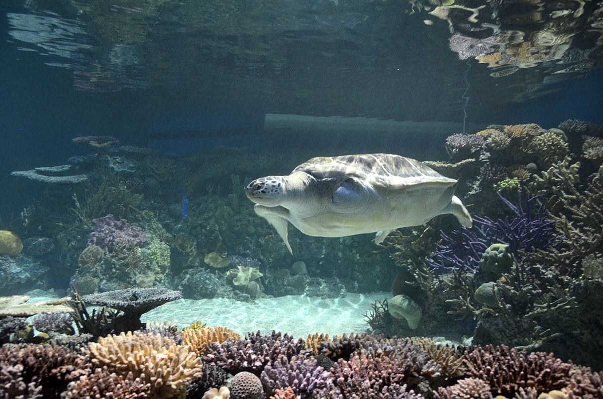 Inside the new Blacktip Reef exhibit at the National Aquarium