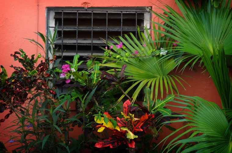 Colorful tropical plants surround a window located near the Hotel El Convento in an alleyway off Calle Caleta de las Monjas (Cove of the Nuns Street) in Old San Juan. (Robert K. Hamilton/Baltimore Sun)