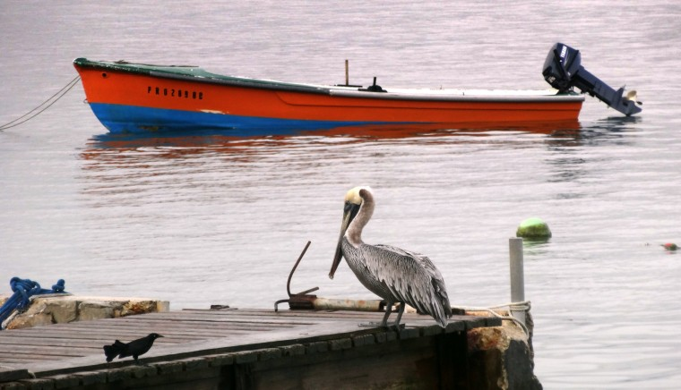 A pelican sits on a pier near where the cruise lines tie up in Old San Juan. San Juan is a popular stop for the big ships. (Robert K. Hamilton/Baltimore Sun)