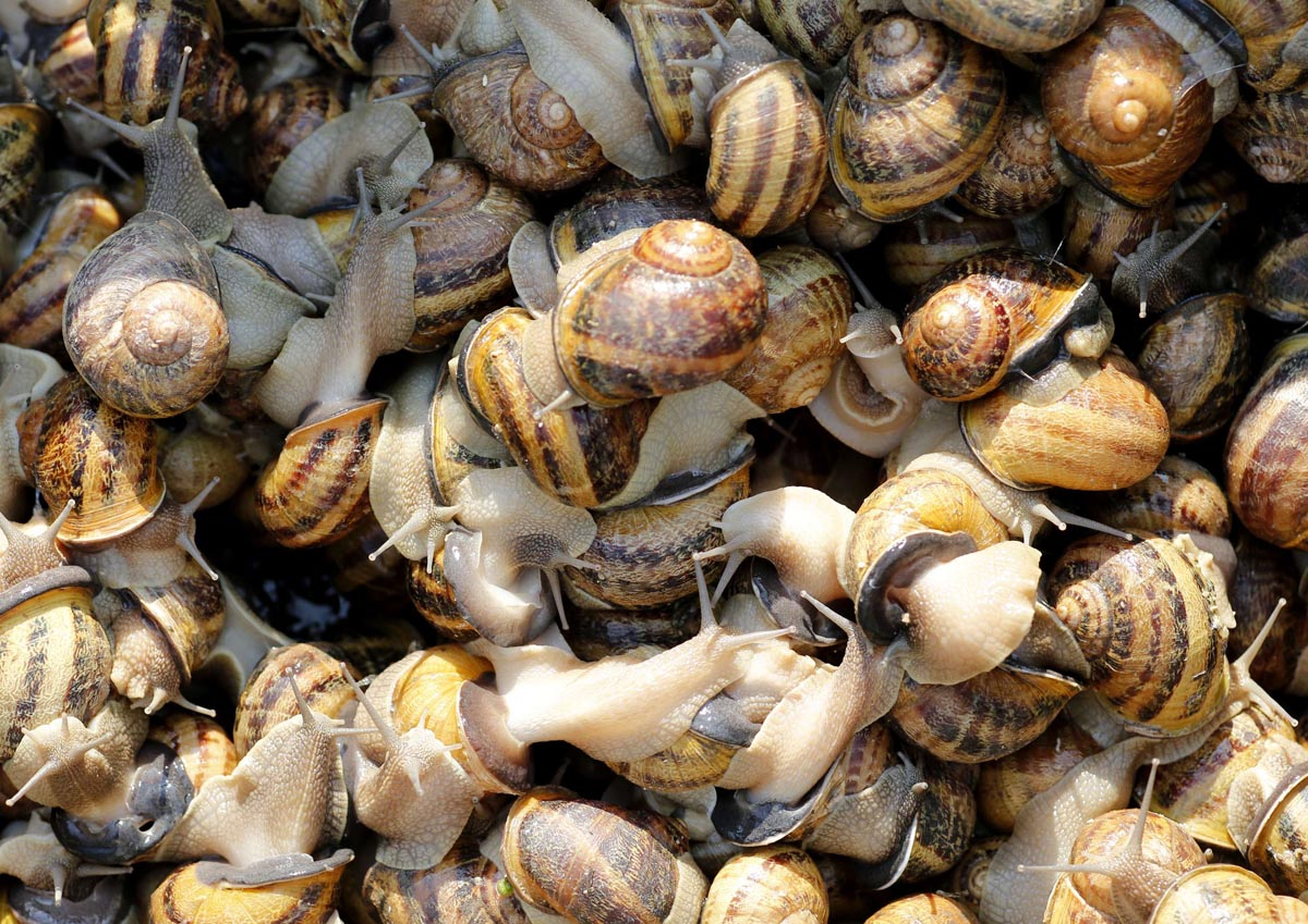 Snail caviar, anyone… Inside Vienna's largest snail farm