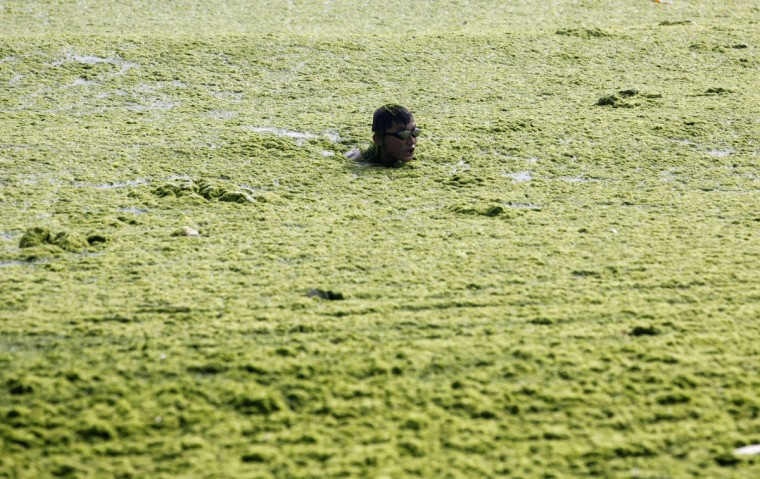 A boy swims swims in the algae-filled coastline of Qingdao, Shandong province. (Reuters)