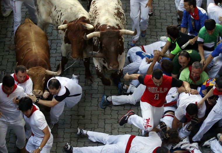 Runners fall in the path of an Alcurrucen fighting bull (L) and steers at the entrance to the bull ring during the first running of the bulls of the San Fermin festival in Pamplona. (Susana Vera/Reuters photo)