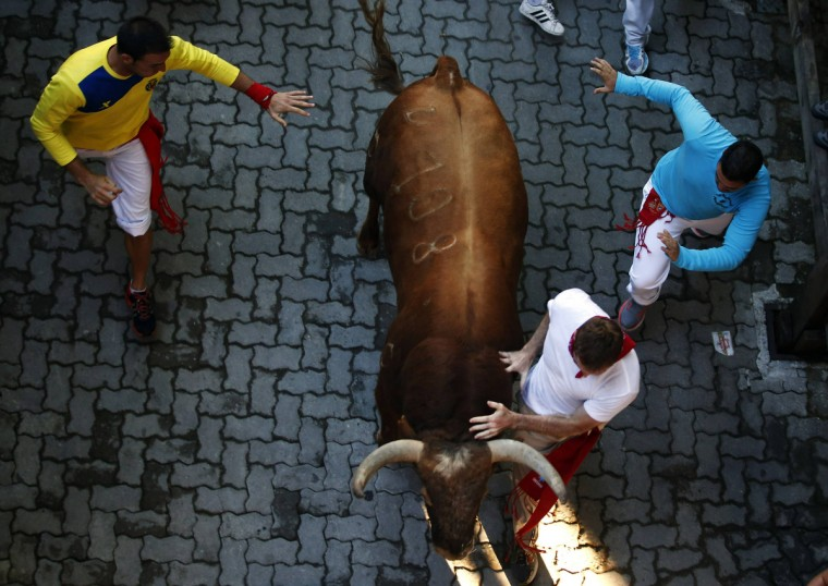 Runners lead an Alcurrucen fighting bull towards the entrance to the bull ring during the first running of the bulls of the San Fermin festival in Pamplona. (Susana Vera/Reuters photo)