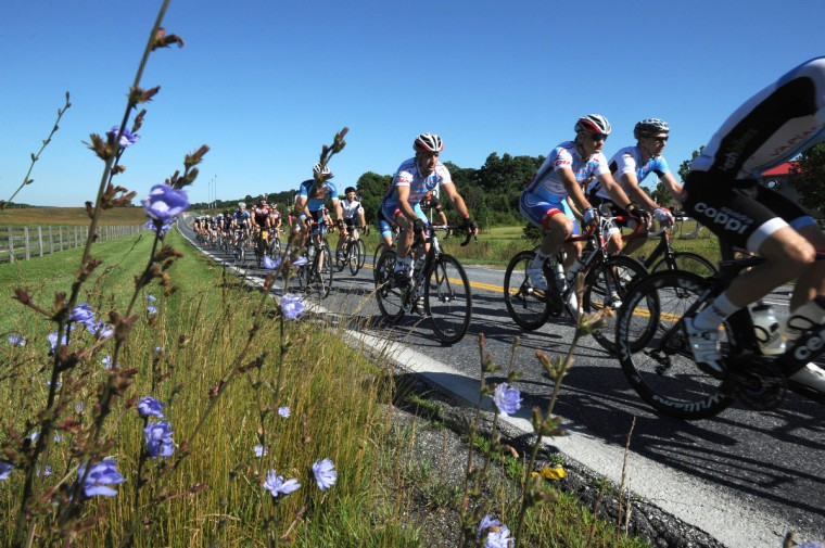 Riders roll out under a neutral start at the beginning of the CAT 4 group of the Road Warrior 50 road race. (Jerry Jackson/Baltimore Sun)