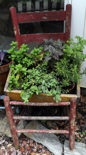 A group of herbs sits in an old chair in the garden. (Barbara Haddock Taylor/Baltimore Sun)