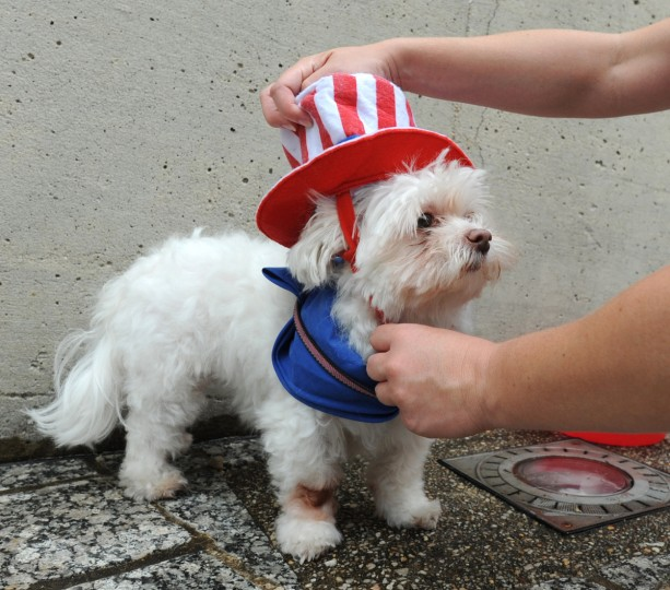Heather O'Brien, of Fells Point, repositions Baby's patriotic pup costume. They are attending Visionary Pets On Parade! at the American VIsionary Arts Museum (AVAM). (Kim Hairston/Baltimore Sun)