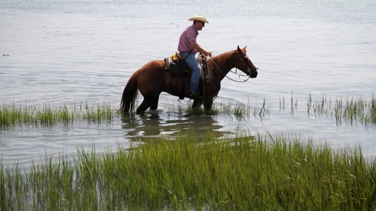 A 'saltwater cowboy,' as the volunteer firefighters are called, waits for the ponies to swim from Assateague Island to Chincoteague Island. (Erin Kirkland/Baltimore Sun)