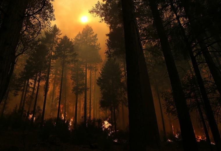 Fire consumes trees along US highway 120 as the Rim Fire burns out of control on August 21, 2013 in Buck Meadows, California. The Rim Fire continues to burn out of control and threatens 2,500 homes outside of Yosemite National Park. Over 400 firefighters are battling the blaze that is only 5 percent contained. (Justin Sullivan/Getty Images)