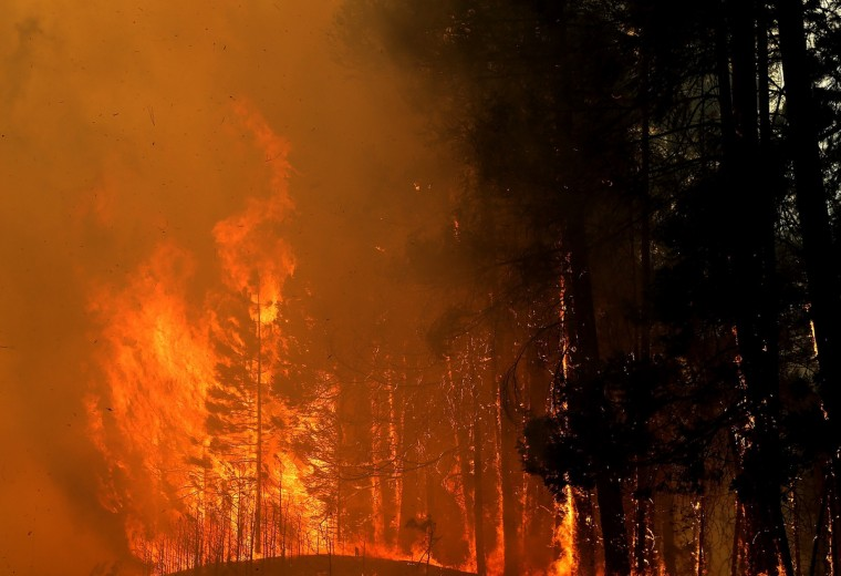 Trees burst into flames along US highway 120 as the Rim Fire continues to burn on August 21, 2013 in Buck Meadows, California. The Rim Fire continues to burn out of control and threatens 2,500 homes outside of Yosemite National Park. Over 400 firefighters are battling the blaze that is only 5 percent contained. (Justin Sullivan/Getty Images)
