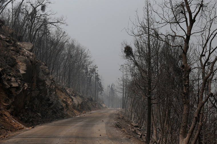 Trees burned by the Rim Fire are seen at Camp Mather on August 23, 2013 near Groveland, California. (Justin Sullivan/Getty Images)
