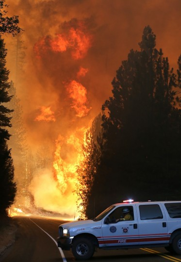 A Murphys Fire District firefighter stops his vehicle as a massive wall of fire from the Rim Fire consumes trees along highway 120 on August 24, 2013 near Groveland, California. (Justin Sullivan/Getty Images)