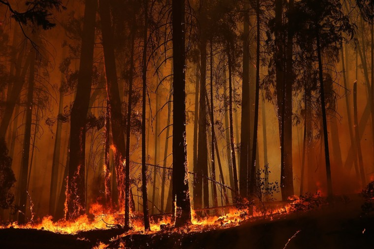 Flames from the Rim Fire consume trees on August 25, 2013 near Groveland, California. (Justin Sullivan/Getty Images)