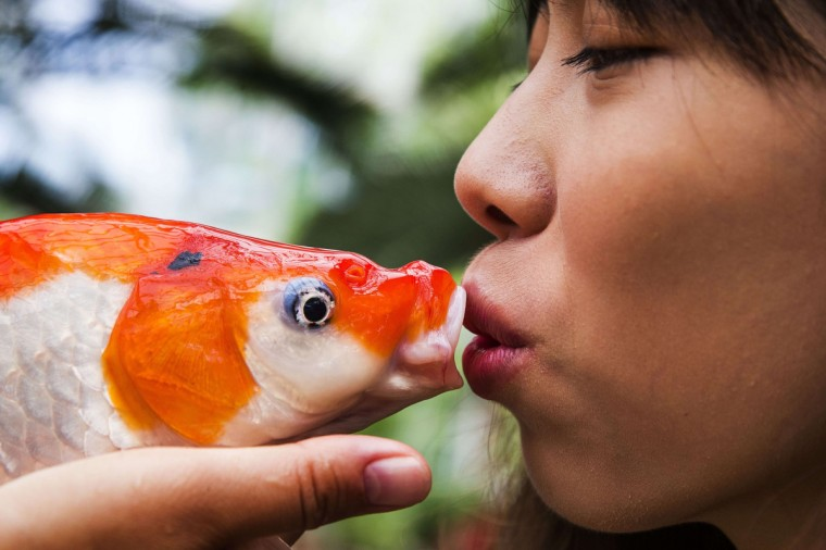 Taiwan's Evelyn Chu kisses a koi before it is placed in the water of a pond of Kasteeltuinen, an estate in Arcen, The Netherlands. The gift of the Taiwanese government marks the start of the Holland Koi Show, the largest koi and pond event in the world, held from August 16 to 18. (Vincent Jannink/Getty Images)