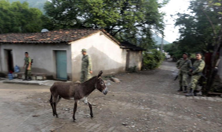 A donkey walks along a street in Huatla village, Heliodoro Castillo municipality, Guerrero State, Mexico, on August 3, 2013. Huatla is one of thirteen villages from where residents have left due to murders, threats and kidnappings by drug cartels' members. (Pedro Pardo/AFP/Getty Images)