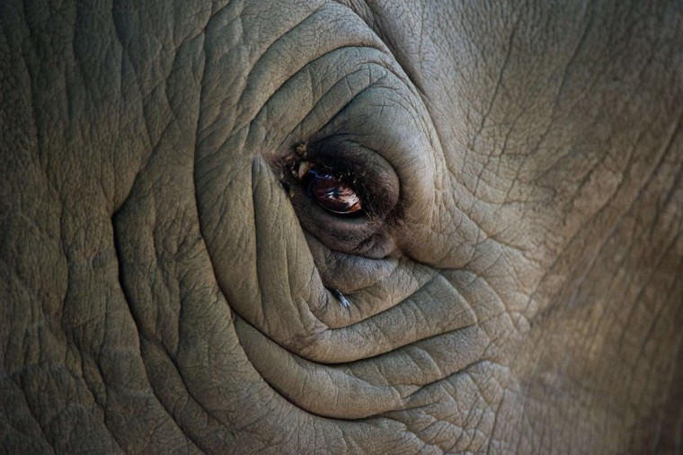 The eye of a rhinoceros is pictured on August 29, 2013 at the zoo in Dortmund, western Germany. (Jan-Philipp Strobel/AFP/Getty Images)