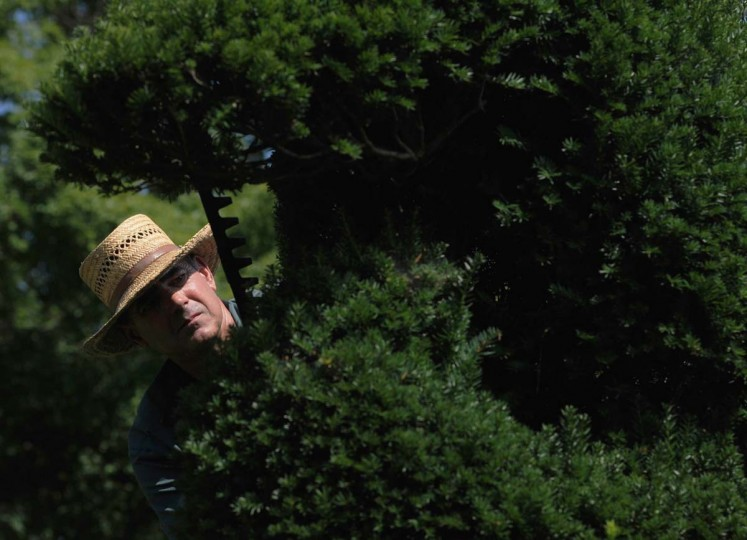 Philip Krach, senior gardener, uses a hedge trimmer to clip a sea horse in the Sculpture Garden of Ladew Topiary Gardens. Krach has lived on the property for 18 years. Kim Hairston/The Baltimore Sun