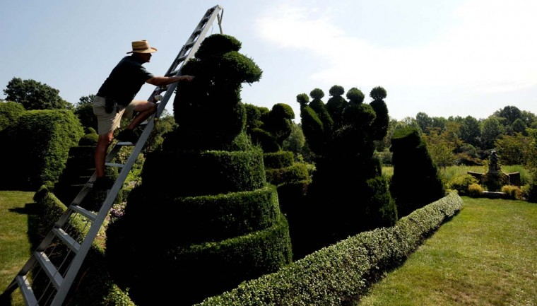 """Philip Krach, senior gardener, trims a sea horse from a ladder in the Sculpture Garden of Ladew Topiary Gardens. """"I like being outside,"""" Krach said. """"I like doing things. It is nice to do something that makes people happy."""" Kim Hairston/The Baltimore Sun"""