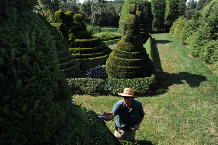Philip Krach, senior gardener, prunes a sea horse. To create topiaries, the artist must first build metal frames into the desired shape and then allow the tree to grow up and around it. Kim Hairston/The Baltimore Sun