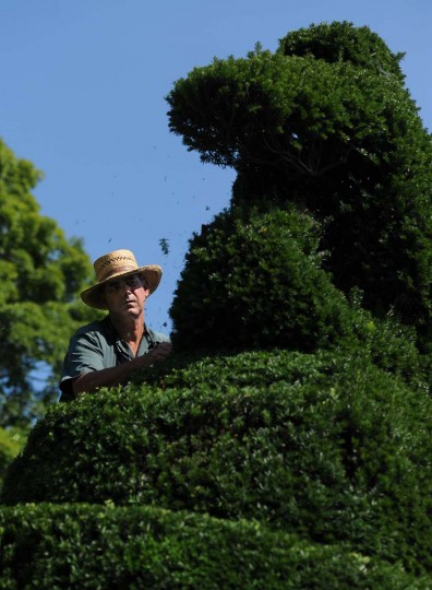 Topiaries are live trees trained into unnatural shapes by gardeners such as Philip Krach. Kim Hairston/The Baltimore Sun
