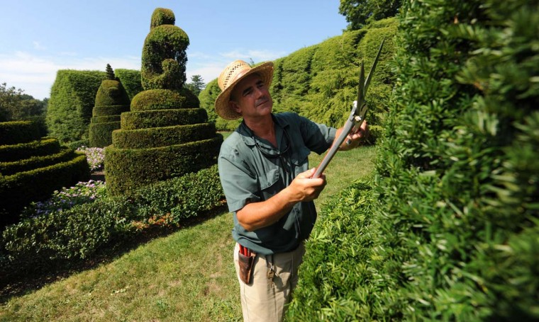 The topiaries are trimmed once a year between July and September by Philip Krach and other gardeners. Kim Hairston/The Baltimore Sun