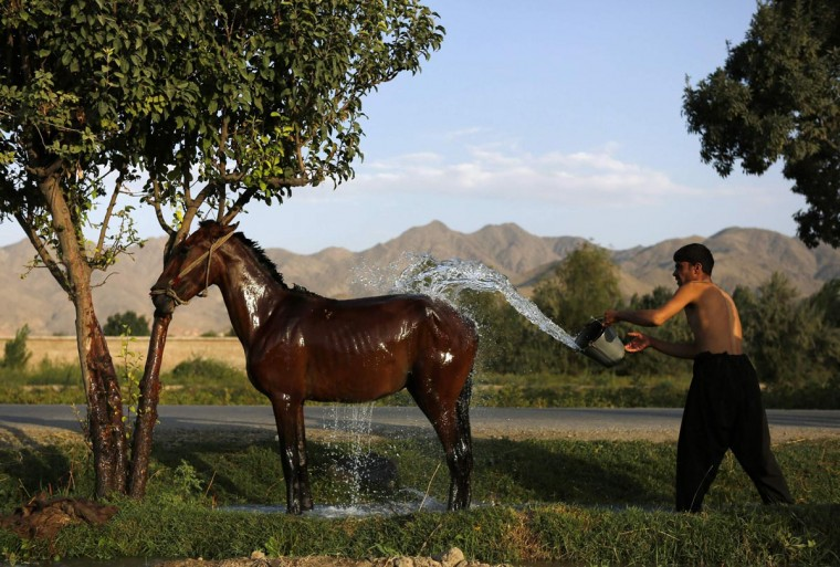 An Afghan man washes his horse in Kabul August 4, 2013. (Mohammad Ismail/Reuters)