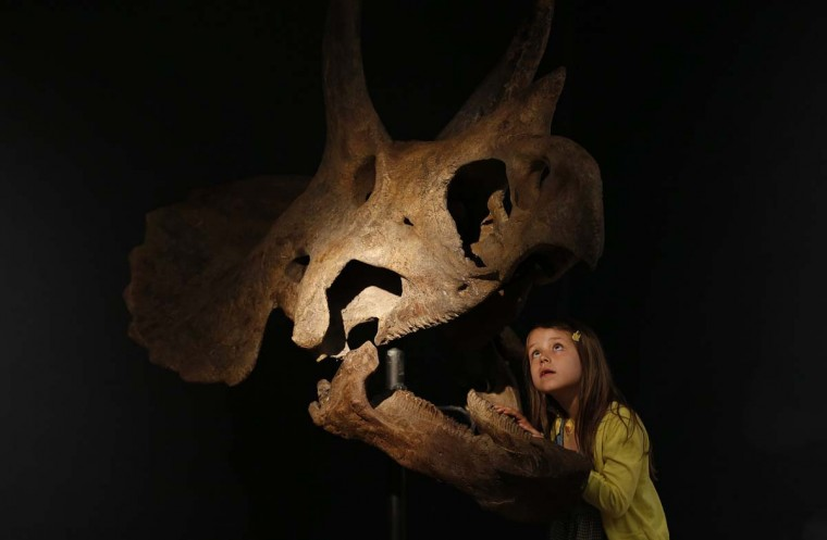 Riva Lemanski, 6 poses with a Triceratops skull at Christie's in London August 5, 2013. The dinosaur skull is expected to sell for £150,000-250,000 (US $230,000-383,000) when it is auctioned at the Christie's Out of the Ordinary sale September 5, 2013.(Suzanne Plunkett/Reuters)