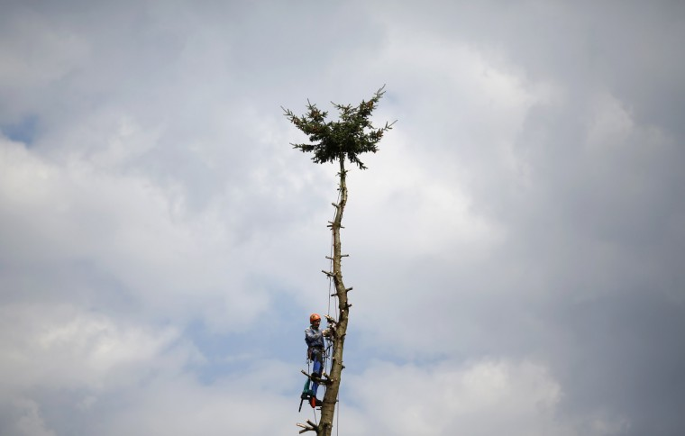 A professional lumberjack cuts a tree branch by branch before felling it in Hanau, 30km south of Frankfurt, Germany. (Kai Pfaffenbach/Reuters)