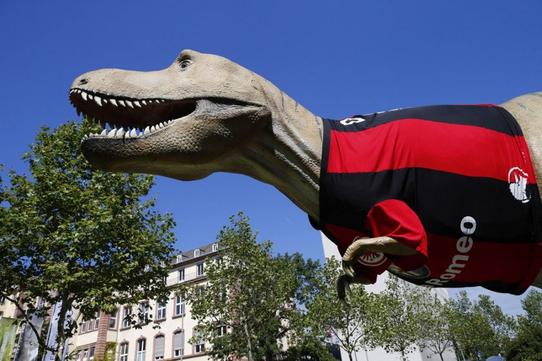 A life-size Tyrannosaurus rex statue, dressed with a jersey of the Bundesliga soccer team Eintracht Frankfurt, is seen in front of the Senckenberg Natural Museum in Frankfurt, August 16, 2013. According to a press release from the museum, the jersey was placed on the statue in preparation for the August 17 match when Eintracht faces FC Bayern Munich in its first home game of the Bundesliga season. (Ralph Orlowski/Reuters)
