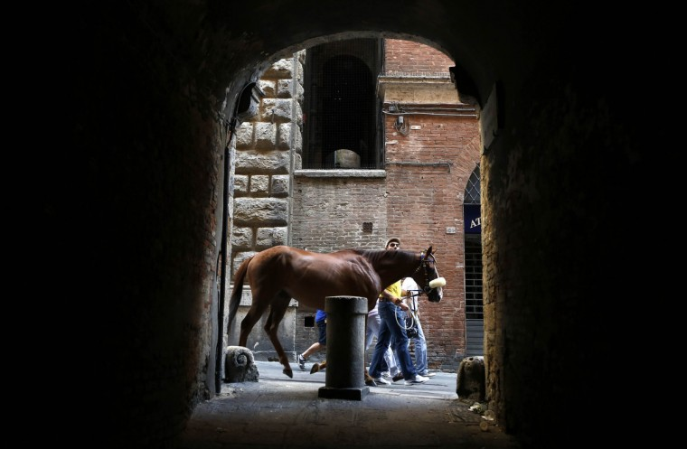 "Porto Alabe, a horse belonging to jockey Sebastiano Murtas of the Tartuca (Turtle) parish, is led by the ""Barbaresco"" before the fourth of six trial horse races in Del Campo square in Siena August 15, 2013. Every year on July 2 and August 16, almost without fail since the mid-1600s, 10 riders compete bareback around Siena's shell-shaped central square in a bid to win the Palio, a silk banner depicting the Madonna and child. (Stefano Rellandini/Reuters)"