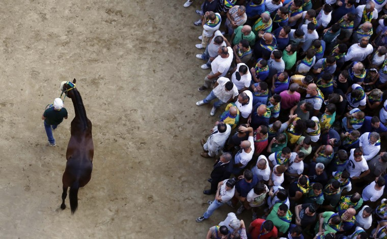 "Mocambo, a horse belonging to jockey Antonio Siri of the Bruco parish, is led by the ""Barbaresco"" after the fifth of six trial horse races in Del Campo square in Siena August 15, 2013. (Stefano Rellandini/Reuters)"
