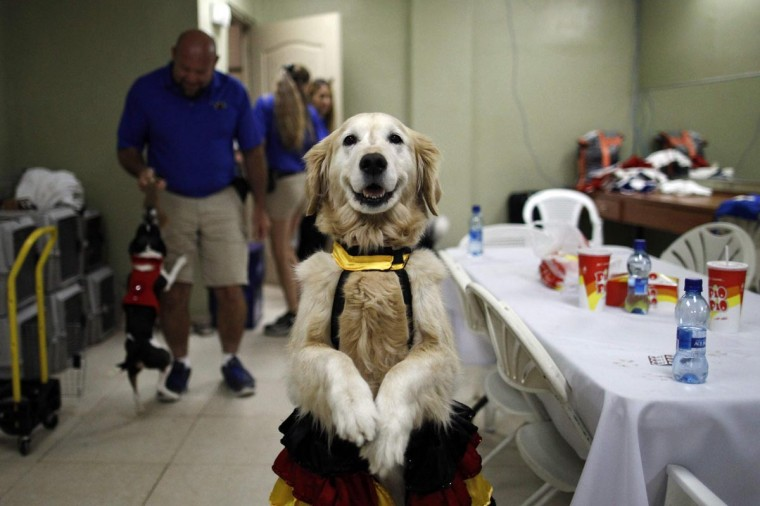 """Carrie practices backstage before performing in """"DOGS: The Incredible Dog Show"""" during their tour in Panama City August 24, 2013. The tour raises awareness about the neglect and cruelty suffered by animals, while also promoting adoptions from animal shelters and will continue to Costa Rica, Honduras and Mexico. The dogs of the show are mostly rescues. (Carlos Jasso/Reuters)"""
