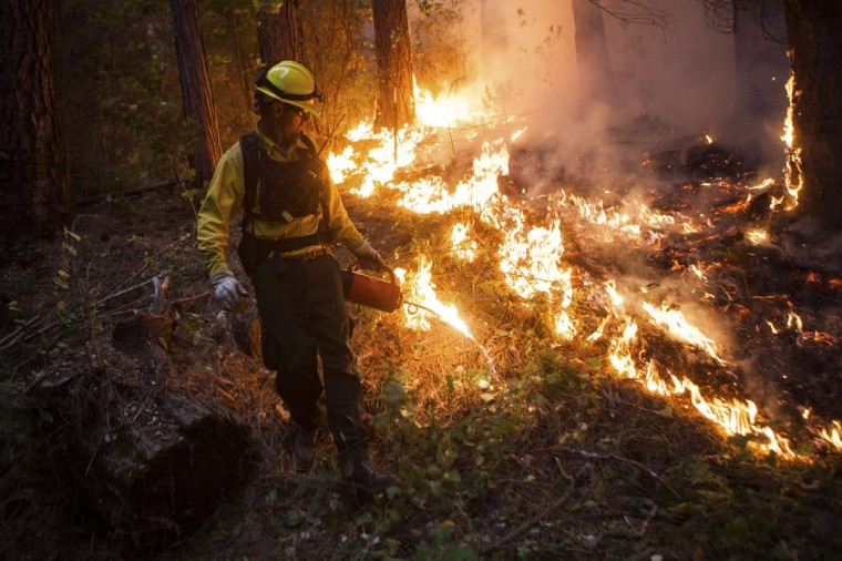 Firefighter Barry Cole sets a back fire on the rim fire near Buck Meadows, California, August 22, 2013. (Max Whittaker/Reuters)