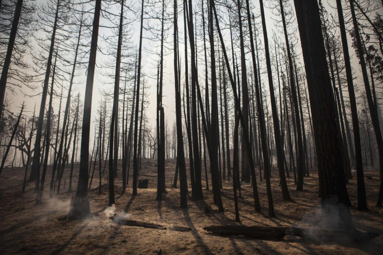 A log smoulders after trees were burnt by the Rim Fire near Buck Meadows, California, August 22, 2013. The fire has burnt 53,866 acres northwest of Yosemite National Park. (Max Whittaker/Reuters)