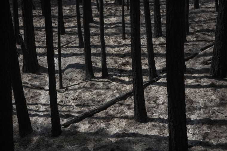 A view of the remains of a forest burned by the Rim Fire, just outside Yosemite National Park, California, August 24, 2013. Firefighters on Saturday battled to gain control of a fast-moving wildfire raging on the edge of Yosemite National Park that is threatening power and water supplies to San Francisco about 200 miles (322 km) to the west. The fire, which had grown to just over 125,000 acres (50,585 hectares) as of early Saturday, remained largely unchecked with extreme terrain hampering efforts at containment. (Max Whittaker/Reuters)