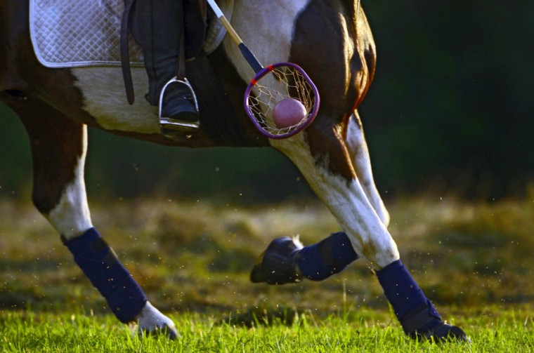 Hordes of gnats attracted to horses buzz around horse hooves, as a rider bounces the ball on the ground using a racket to maintain possession during practice. (Karl Merton Ferron/Baltimore Sun)